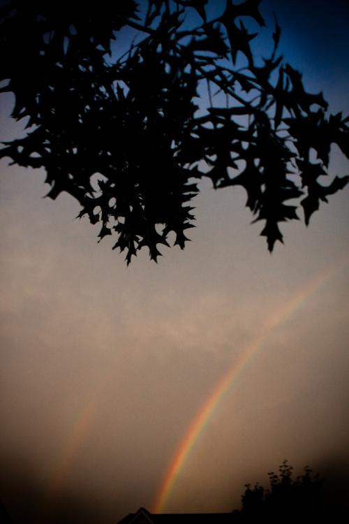 Rainbow-4997