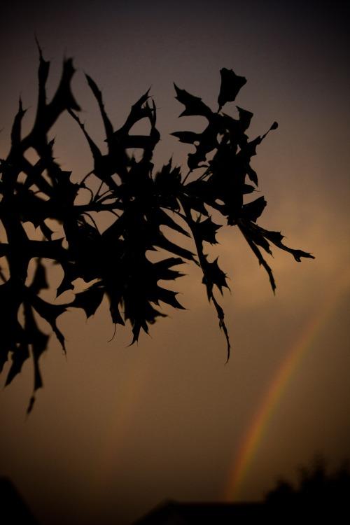 Rainbow-5003
